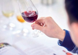 Wine Story Academy offers top-tier wine education